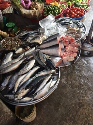 Vớt cá chết để bán, dễ mang họa - ảnh 1