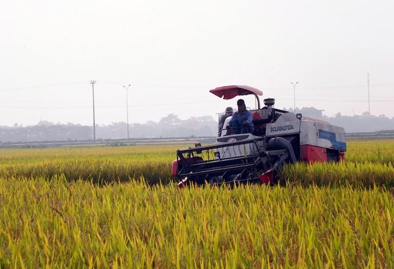 Ô nhiễm môi  trường có  làm gạo kém chất lượng? - ảnh 1