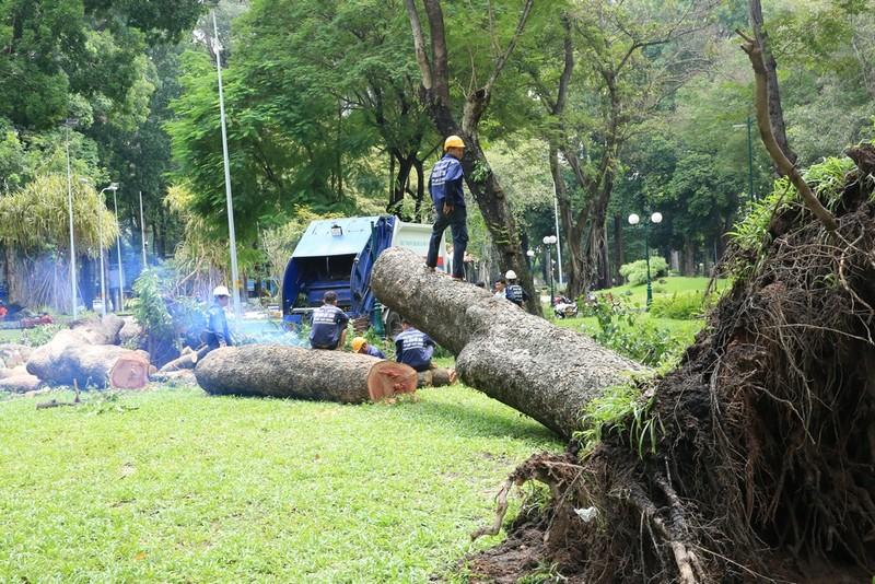 Nguyên nhân cây cổ thụ khủng ở công viên Tao Đàn bật gốc   - ảnh 1