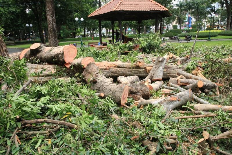 Nguyên nhân cây cổ thụ khủng ở công viên Tao Đàn bật gốc   - ảnh 2