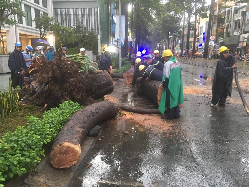 Nguyên nhân cây xanh bật gốc, ngã đè chết người ở quận 10 - ảnh 1