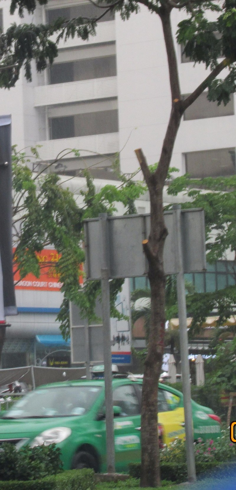 Nhóm người bí ẩn cắt trụi hàng cây ở đường Trường Sơn - ảnh 2