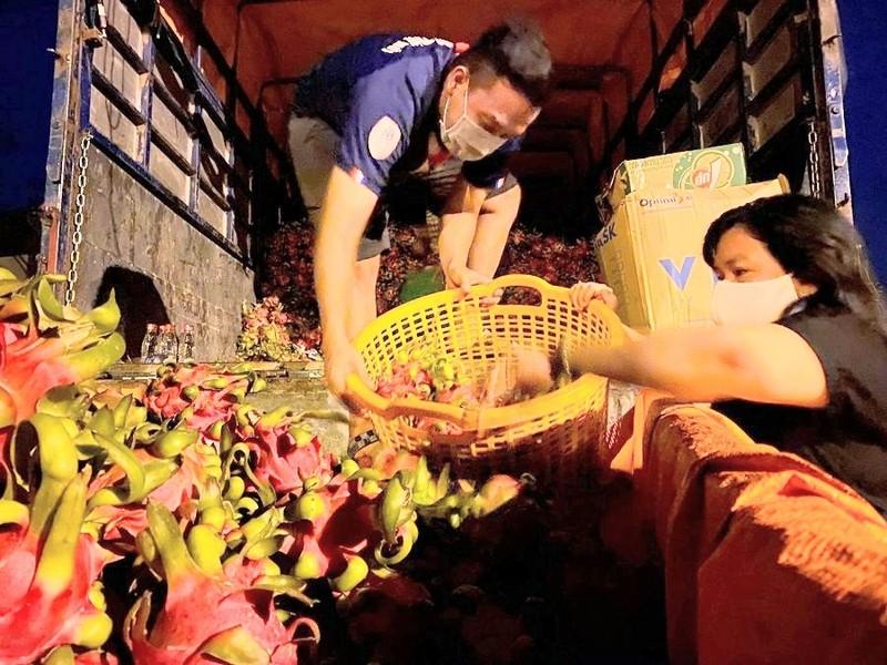 Nông dân miền tây tặng thanh long cho người dân TP.HCM - ảnh 1