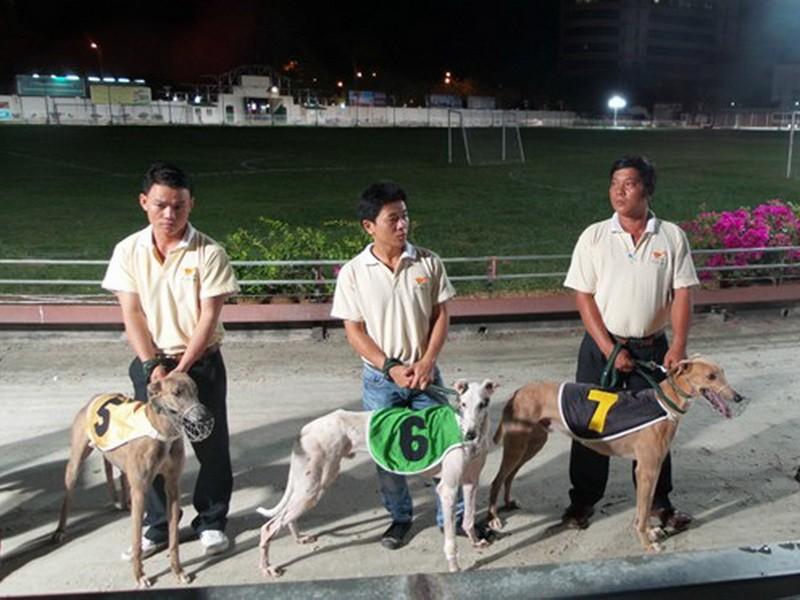 Chó đua, ngựa đua phải thử doping - ảnh 1