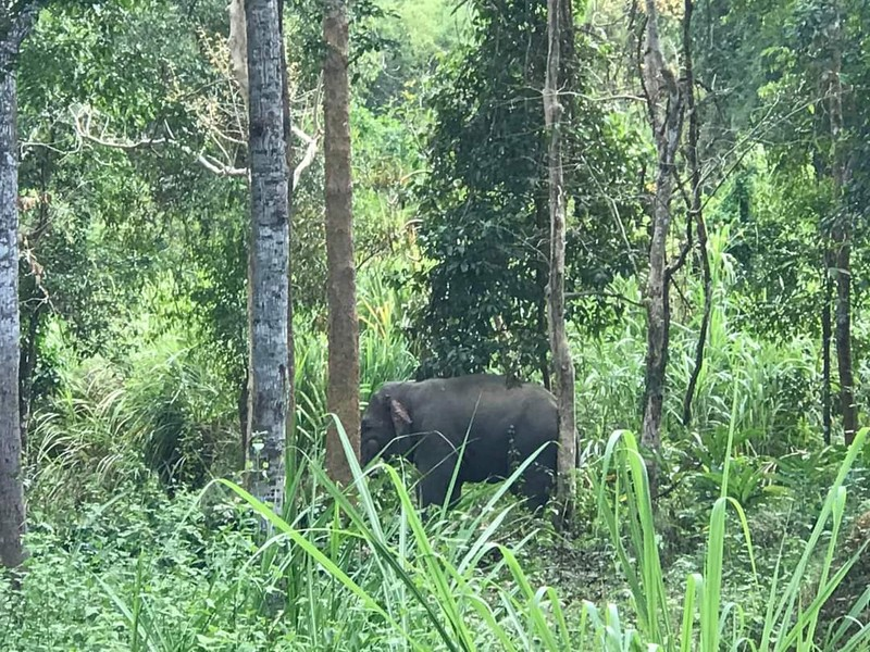 Voi ra gần trung tâm Vườn Quốc gia Cát Tiên - ảnh 5