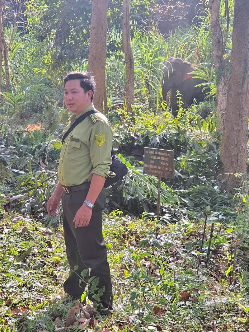 Voi ra gần trung tâm Vườn Quốc gia Cát Tiên - ảnh 7