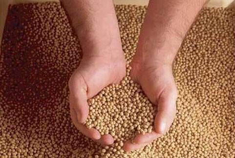 Cấm 5 chất gây ung thư trộn trong thức ăn chăn nuôi - ảnh 1
