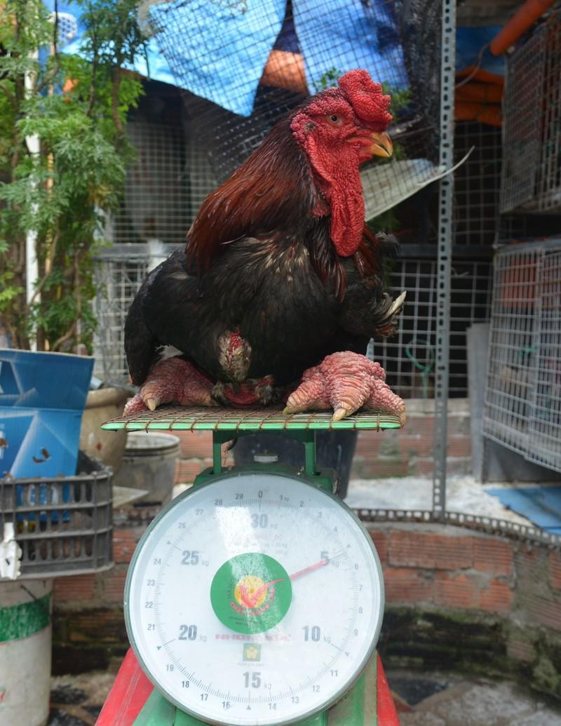gà Đông Tảo