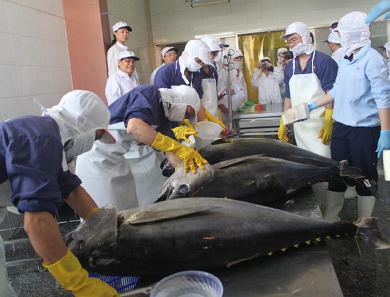 Cá ngừ Việt 'đắc lợi' từ cuộc chiến thương mại Mỹ-Trung  - ảnh 1