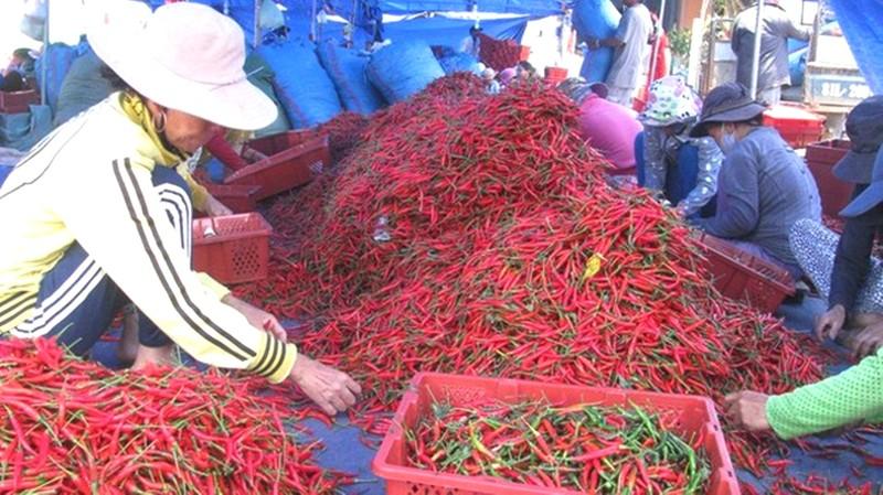 Trái ớt Việt Nam bất ngờ bị Malaysia 'chê' - ảnh 1