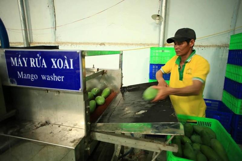'Người Mỹ rất thích ăn xoài Việt Nam'  - ảnh 1