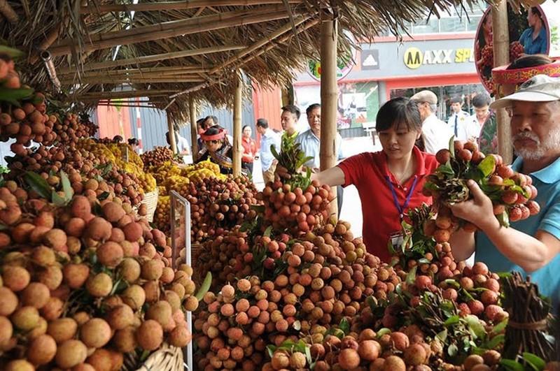 Trung Quốc thu hoạch 500.000 ha vải thiều, Việt Nam có lo?  - ảnh 1