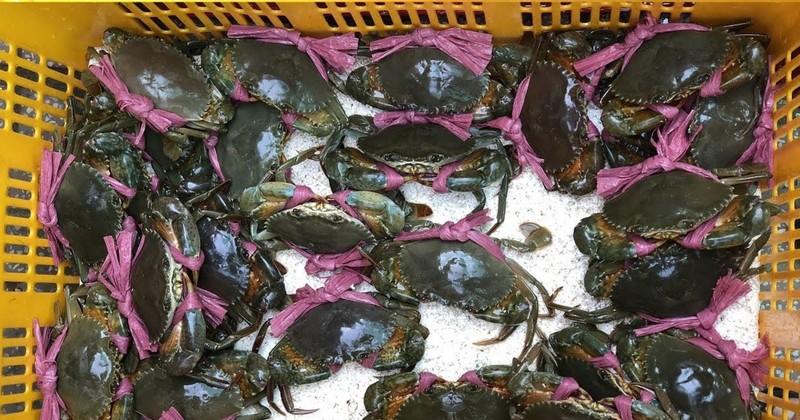 Sốc: Giá cua biển bán sang Trung Quốc rẻ bất thường - ảnh 1