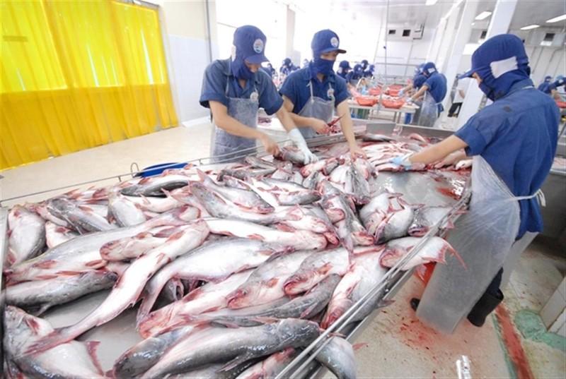 Cá tra Việt tìm đường vượt dịch COVID-19 - ảnh 1