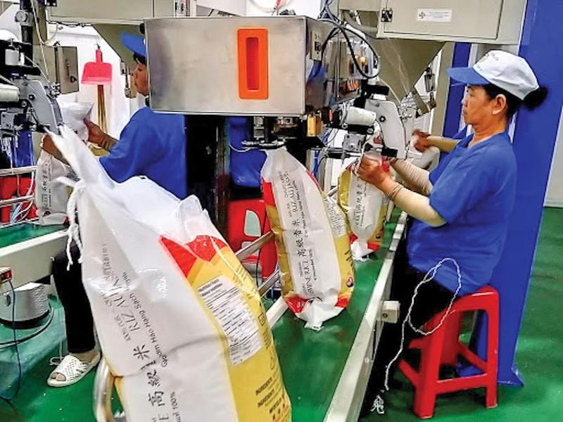Nóng: Chính thức đề xuất Thủ tướng cho xuất khẩu gạo trở lại - ảnh 2