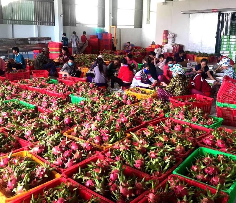 Trái cây Việt Nam xuất khẩu sang Thái Lan tăng hơn 240% - ảnh 1
