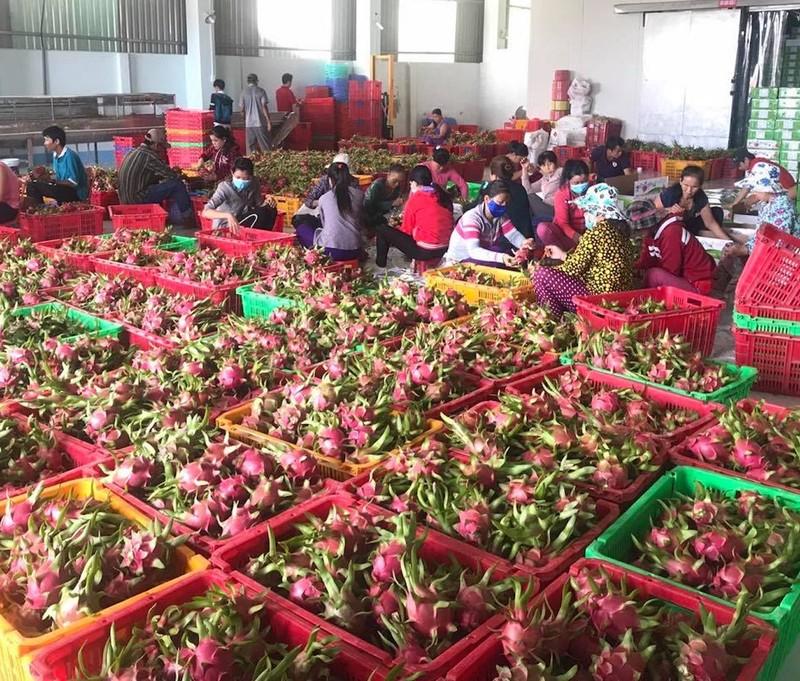 Thái Lan tăng mạnh nhập khẩu trái cây Việt Nam - ảnh 1