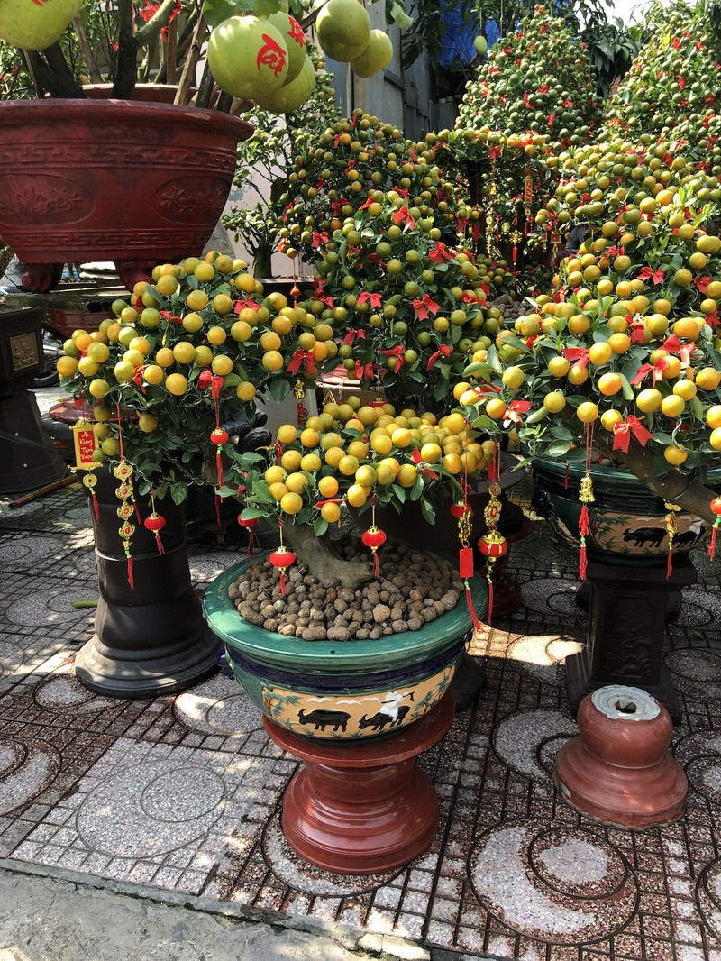 Tắc trâu vàng, tắc bonsai tạo hình kỳ công đắt khách - ảnh 4