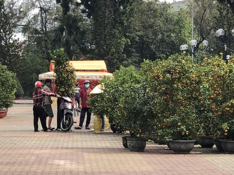 Tắc trâu vàng, tắc bonsai tạo hình kỳ công đắt khách - ảnh 3