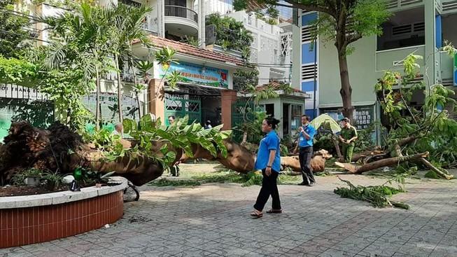 TP.HCM rà soát cây xanh sau vụ cây phượng đè chết học sinh - ảnh 1