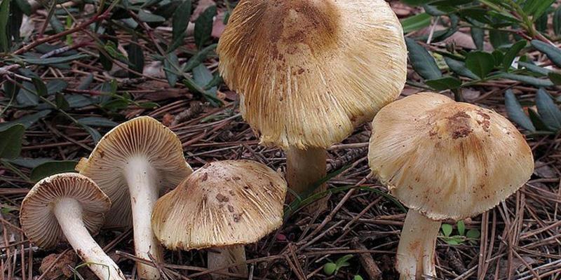 Những đặc điểm cần biết để nhận diện nấm độc - ảnh 3
