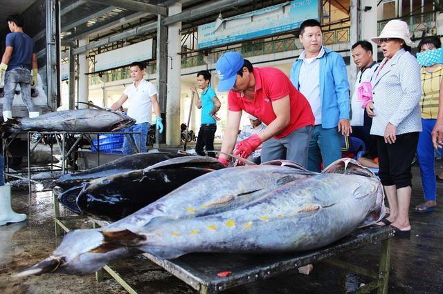 Vì sao cá ngừ dễ gây ngộ độc khi ăn? - ảnh 1