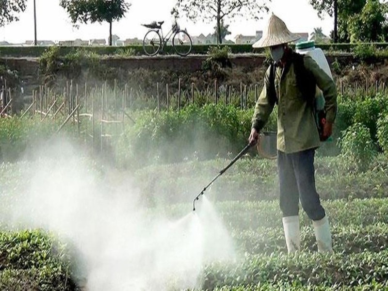 Hiểm họa thực phẩm bị tồn dư thuốc bảo vệ thực vật - ảnh 1