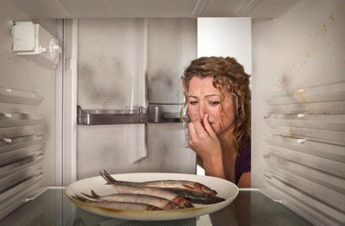 Vì sao thực phẩm lưu trữ trong tủ lạnh cũng dễ bị hỏng? - ảnh 1