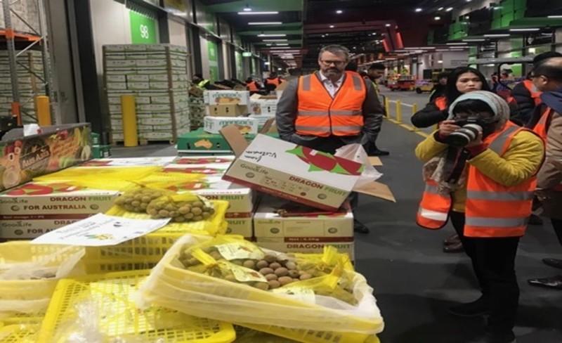'Giải cứu' lô nhãn đầu tiên vừa xuất khẩu sang Úc - ảnh 1