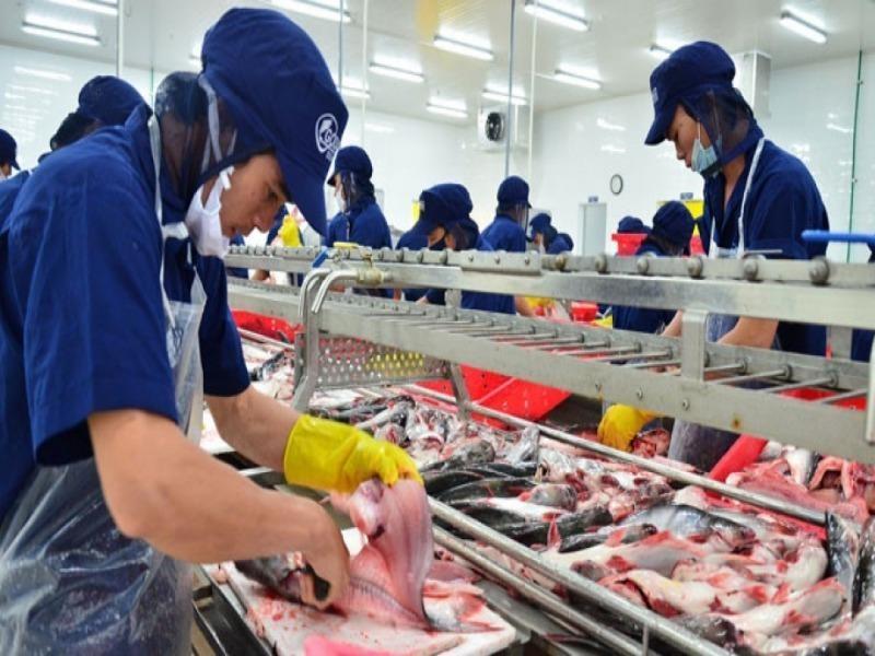 Cá tra Việt Nam được Mỹ giảm thuế chống phá giá - ảnh 1