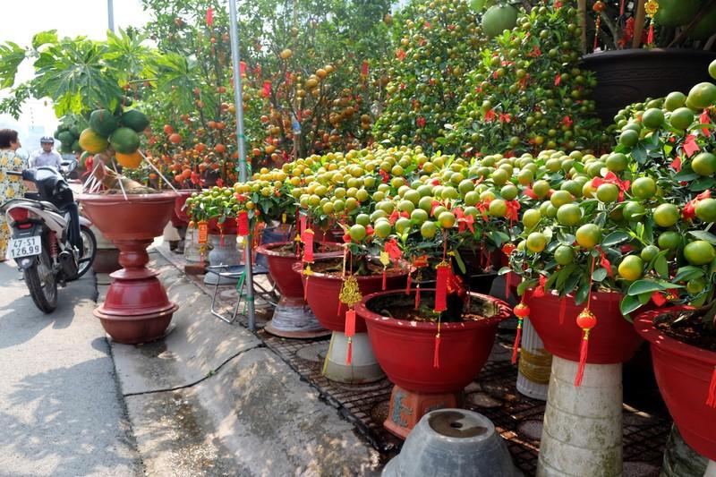 Độc đáo cây ăn trái vào chậu cảnh tết - ảnh 11