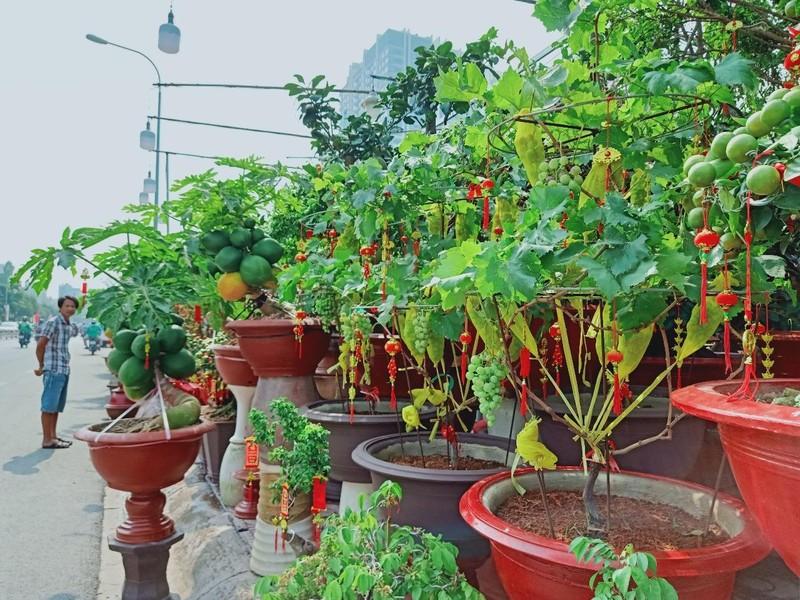 Độc đáo cây ăn trái vào chậu cảnh tết - ảnh 2