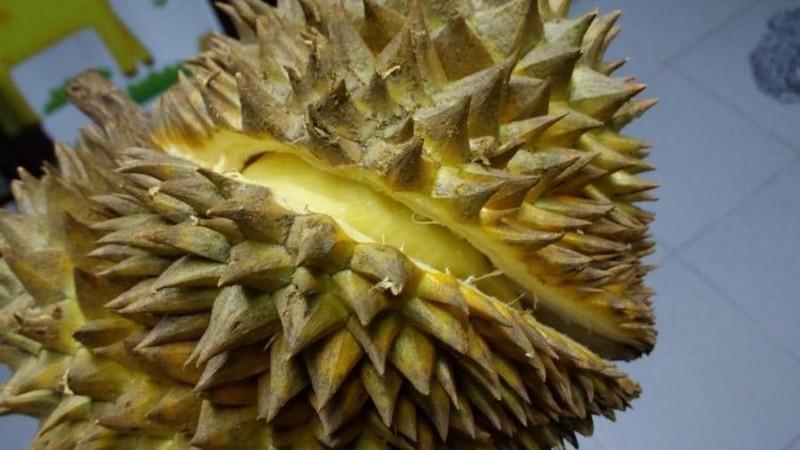 Nhận biết sầu riêng chín cây và sầu riêng nhúng thuốc - ảnh 2