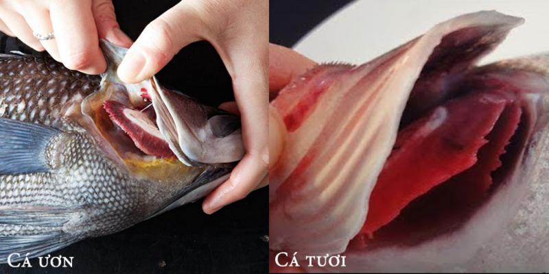 Mẹo phân biệt cá tươi đông lạnh và cá ươn? - ảnh 1