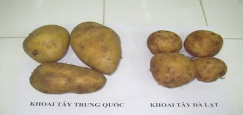 Ba mẹo đơn giản nhận biết khoai tây Trung Quốc gắn mác Đà Lạt - ảnh 1