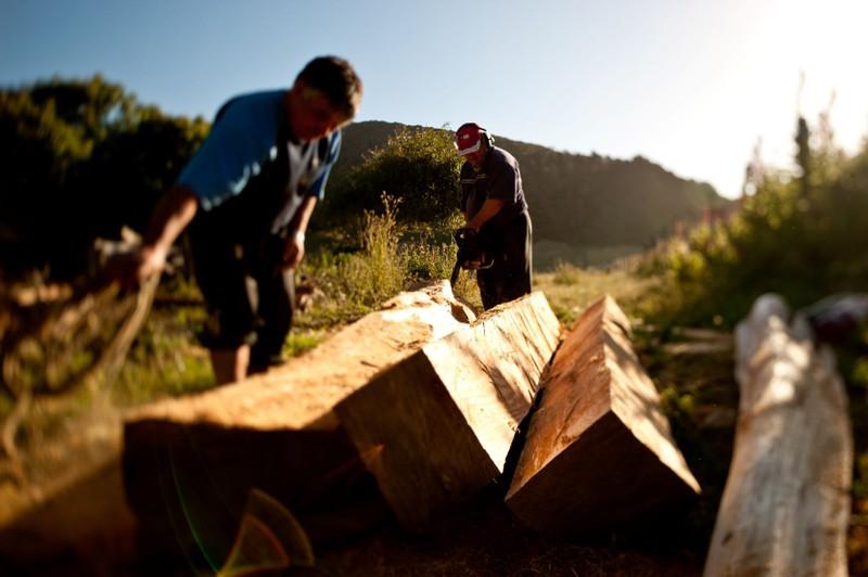 Doanh nghiệp gỗ muốn mở lối đi mới để hồi phục sản xuất - ảnh 1