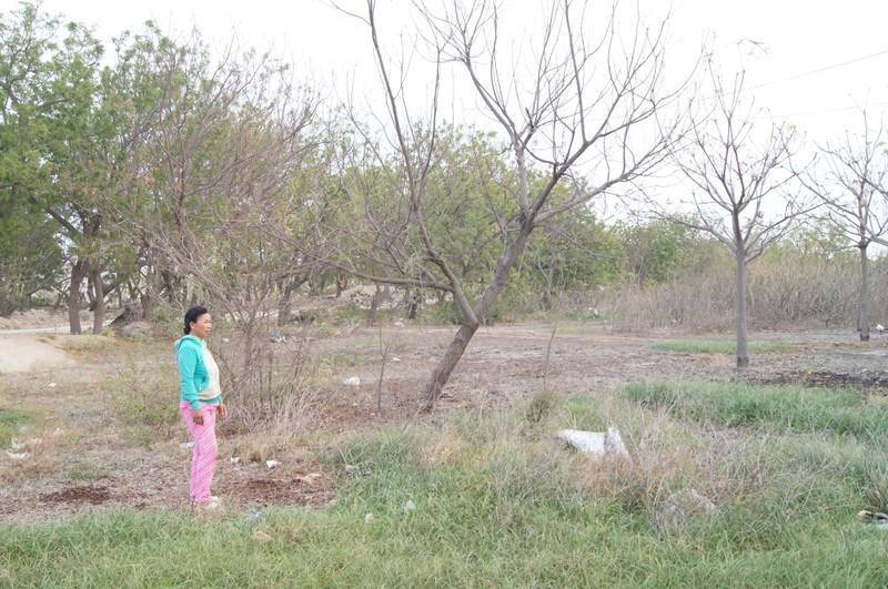 Nguyên nhân đất nhiễm mặn, cây chết tại Vĩnh Tân - ảnh 2