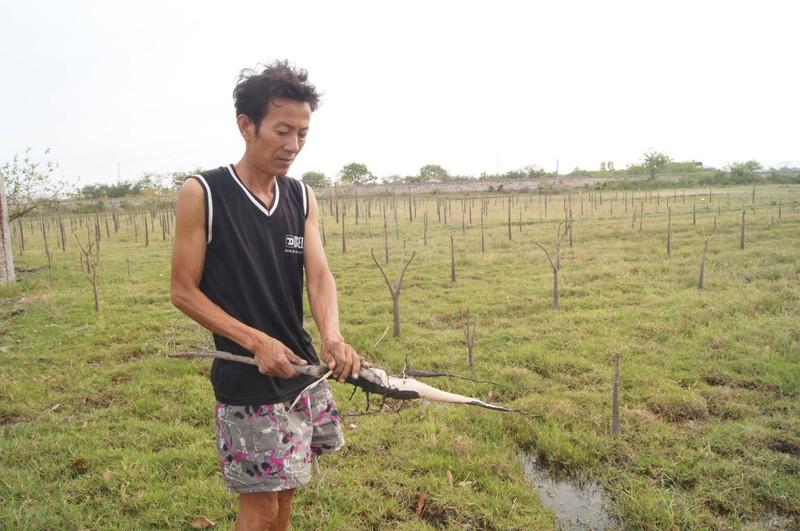 Nguyên nhân đất nhiễm mặn, cây chết tại Vĩnh Tân - ảnh 1