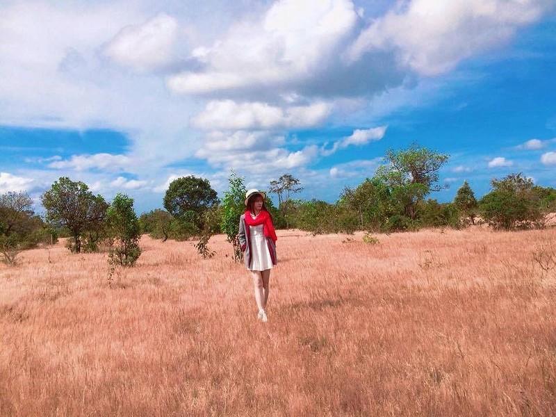 Sẽ phá rừng thông, đồi cỏ hồng tuyệt đẹp làm sân golf? - ảnh 2
