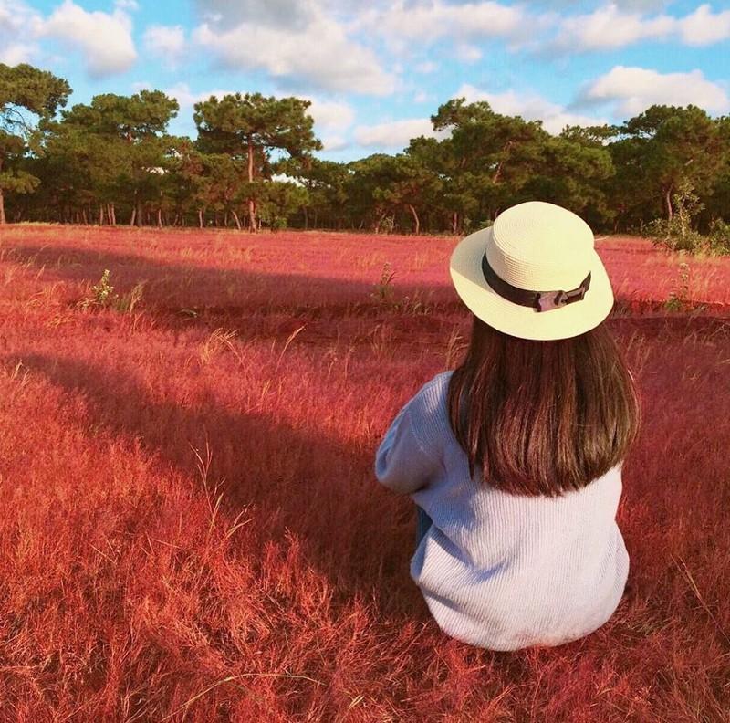 Sẽ phá rừng thông, đồi cỏ hồng tuyệt đẹp làm sân golf? - ảnh 4