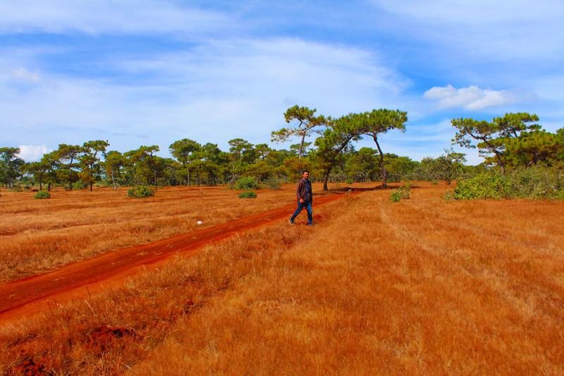Sẽ phá rừng thông, đồi cỏ hồng tuyệt đẹp làm sân golf? - ảnh 3