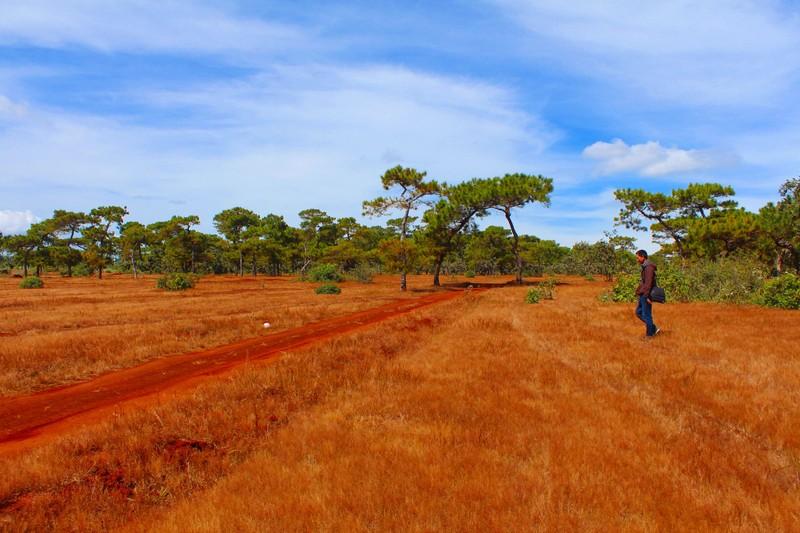 Sẽ phá rừng thông, đồi cỏ hồng tuyệt đẹp làm sân golf? - ảnh 1