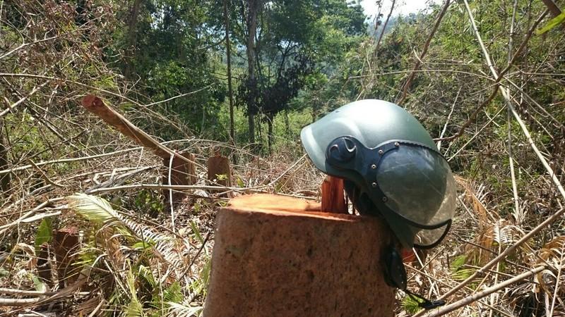 Công an đi kiểm tra vụ phá rừng trên đồi Kumagai - ảnh 1