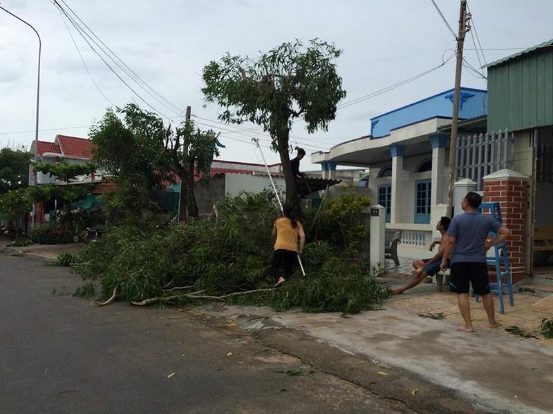 Dân đảo Phú Quý hạ cây, neo thuyền... chờ bão số 9  - ảnh 1