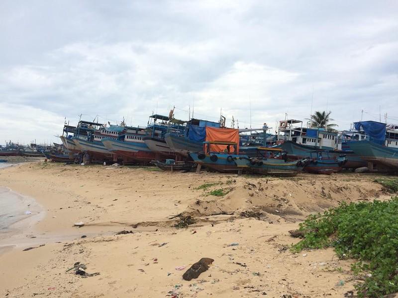 Dân đảo Phú Quý hạ cây, neo thuyền... chờ bão số 9  - ảnh 2