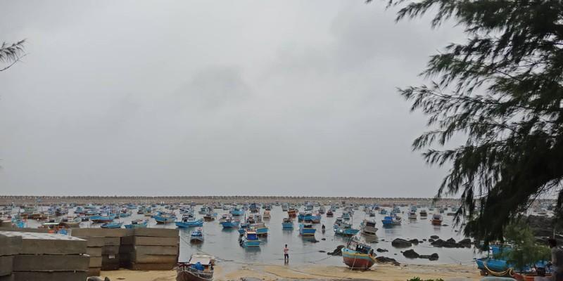 Phú Quý đã có gió to mưa lớn, nhiều cây bị quật trốc gốc - ảnh 4