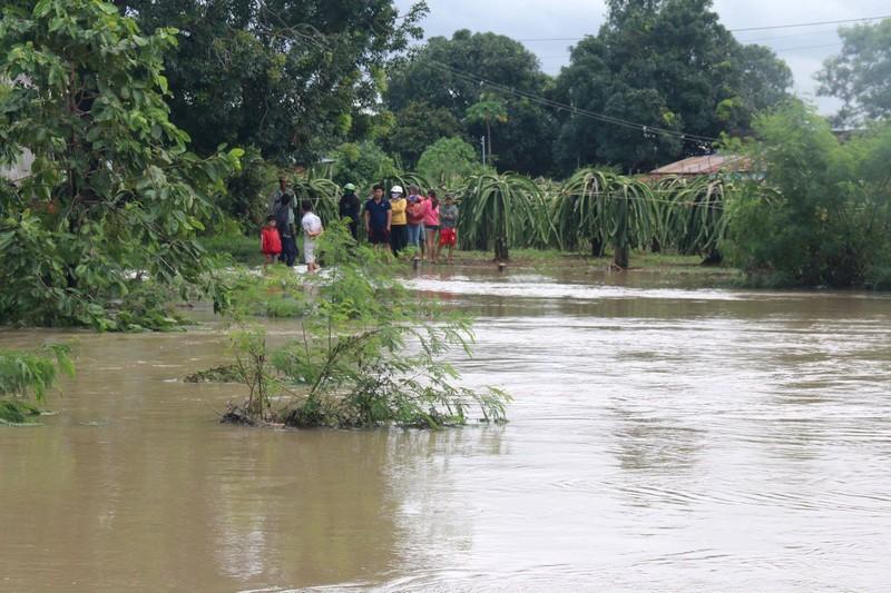Bình Thuận: Thanh long ngập nước, 200 hộ dân bị chia cắt  - ảnh 2