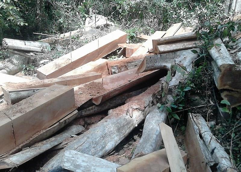 Bắt trạm trưởng bảo vệ rừng Đại Ninh vì bao che phá rừng - ảnh 1
