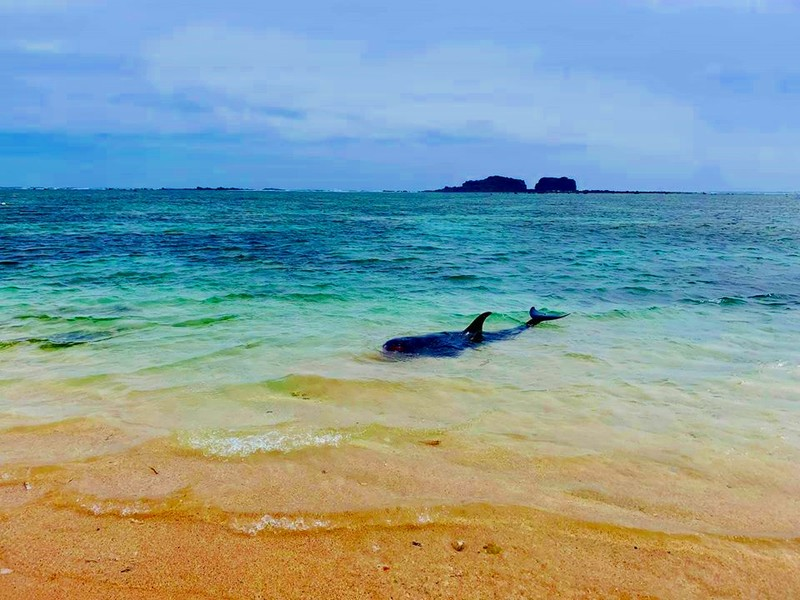 Dân tổ chức hò bá trạo để cá bà chuông về biển mà bất thành - ảnh 5