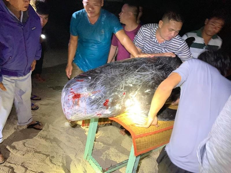 Dân tổ chức hò bá trạo để cá bà chuông về biển mà bất thành - ảnh 3